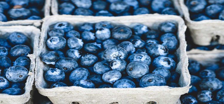 Osmosis comida.jpg
